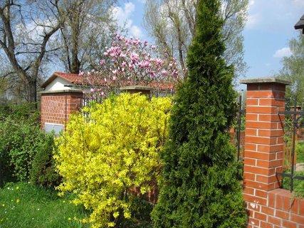 FOTKA - Jaro v Letňanech 3