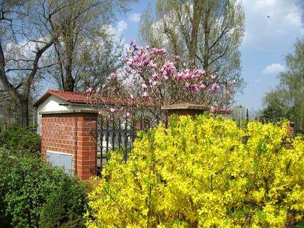 FOTKA - Jaro v Letňanech 4