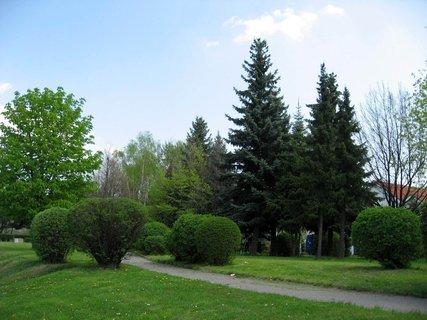 FOTKA - Jaro v Letňanech 7