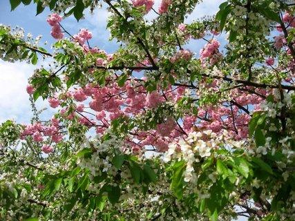 FOTKA - Jaro v Letňanech 10
