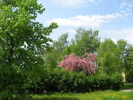 FOTKA - Jaro v Letňanech 12
