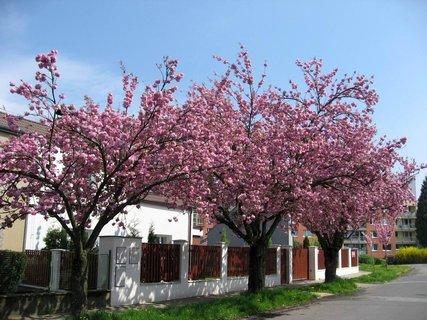 FOTKA - Jaro v Letňanech 14