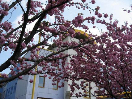 FOTKA - Jaro v Letňanech 19