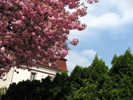 FOTKA - Jaro v Letňanech 20