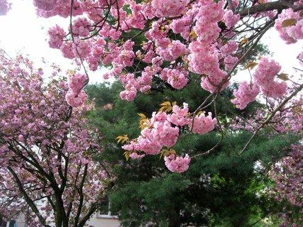 FOTKA - Jaro v Letňanech 21
