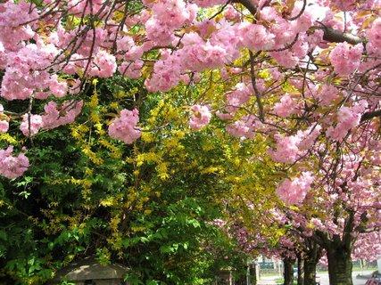 FOTKA - Jaro v Letňanech 23