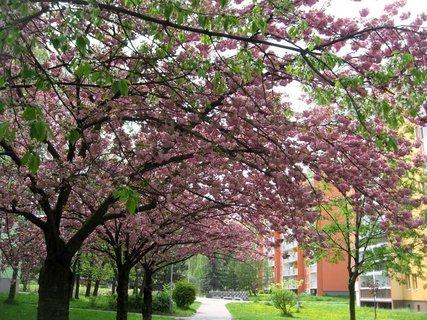FOTKA - Jaro v Letňanech 24