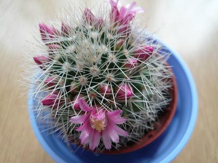 FOTKA - kaktus od dcery