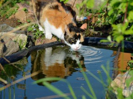 FOTKA - Žíznivá Dorotka