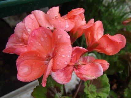 FOTKA - dnes po daždi.