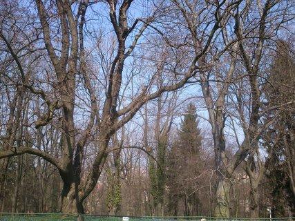 FOTKA - v parku