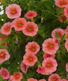 FOTKA - květy v květináči