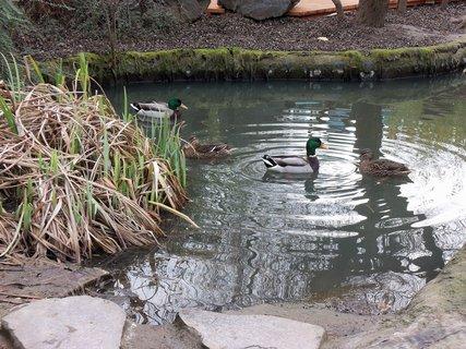 FOTKA - Ptactvo a voda 2