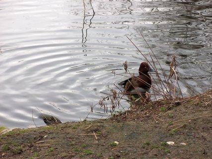 FOTKA - Ptactvo a voda 3
