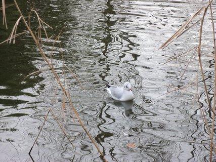 FOTKA - Ptactvo a voda 4