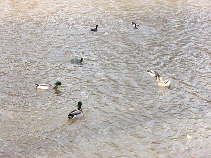 FOTKA - Ptactvo a voda  9