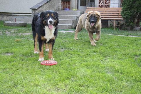 FOTKA - psí slečny  ..  --