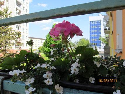 FOTKA - V druhém truhlíku je růžový