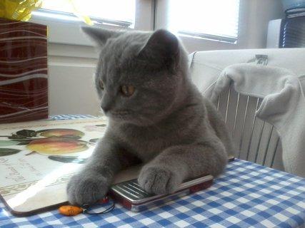 FOTKA - Jdeš z toho stolu?:-)
