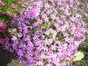 Naše květena 4