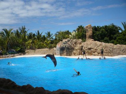 FOTKA - Cvičení delfínů