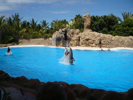 FOTKA - Cvičení delfínů II