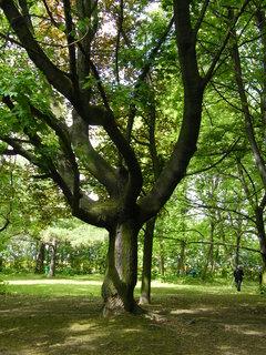 FOTKA - Strom ve Slaném 1