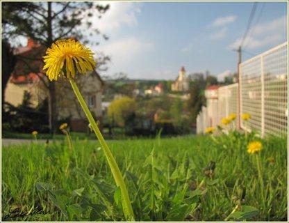FOTKA - Pampeliška a výhled