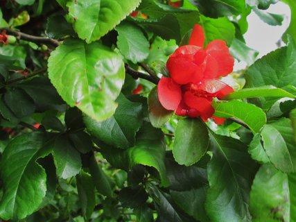 FOTKA - květy jarního keře