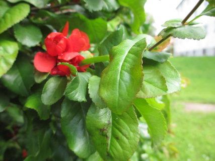 FOTKA - květy jarního keře 3