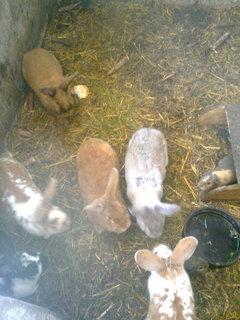 FOTKA - zahrádka 19-králíci