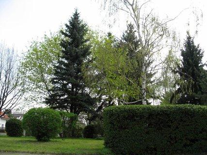 FOTKA - Jarní procházka 4