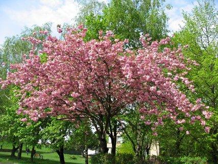 FOTKA - Jarní procházka 7