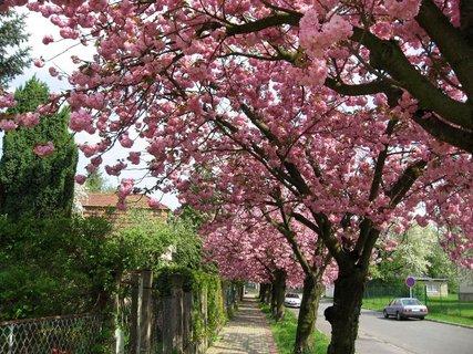 FOTKA - Jarní procházka 16