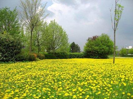 FOTKA - Jarní procházka 19