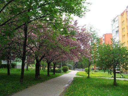 FOTKA - Jarní procházka 23