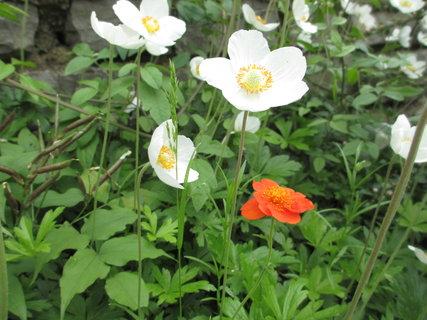 FOTKA - jarní kytky 4