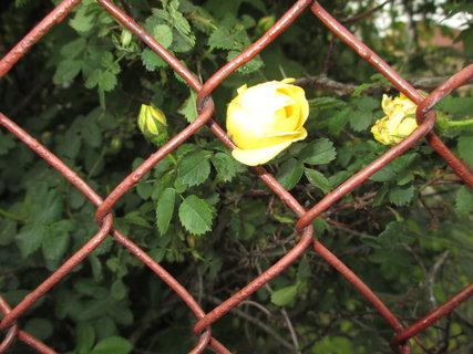 FOTKA - jarní kytky 7