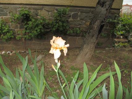 FOTKA - jarní kytky 10