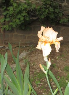 FOTKA - jarní kytky 11