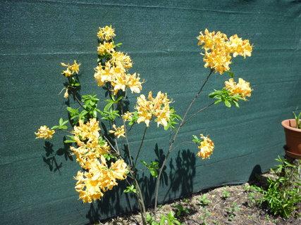 FOTKA - Zahrada v rozkvětu