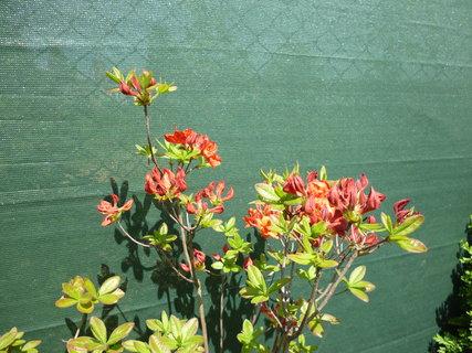 FOTKA - Zahrada v rozkvětu 6