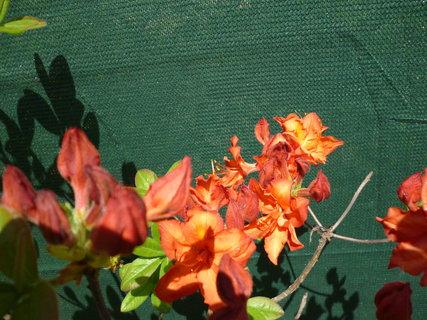 FOTKA - Zahrada v rozkvětu 7