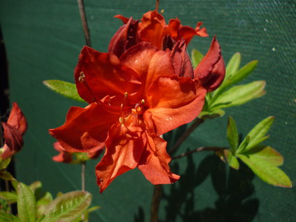FOTKA - Zahrada v rozkvětu 8