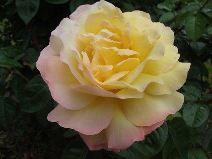 FOTKA - s ružovými okrajmi