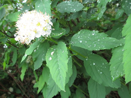 FOTKA - po dešti 3