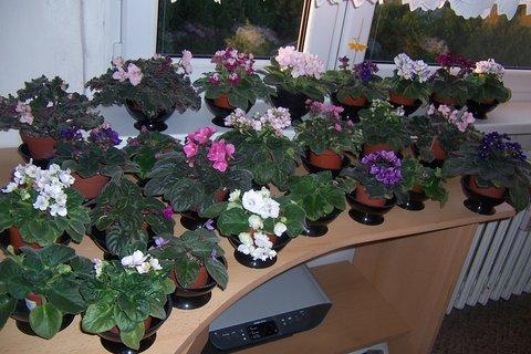FOTKA - kvetoucí stůl