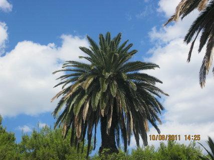 FOTKA - palmaaa