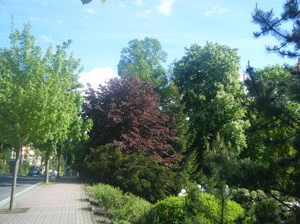 FOTKA - Park 5