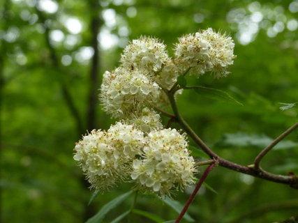 FOTKA - kvety